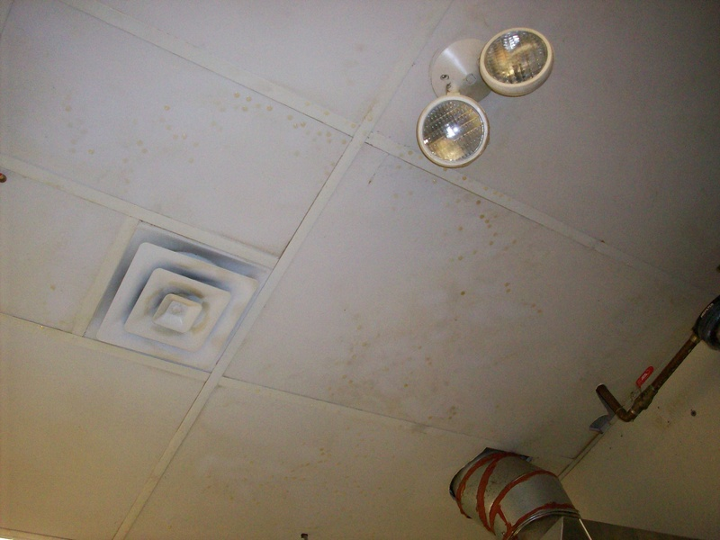 Non Porous Tile Natural Clean Ceiling Cleaning Specialists
